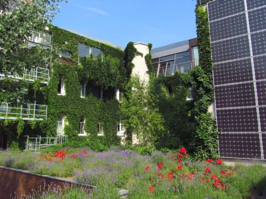 Solar panel with lavender and rose garden