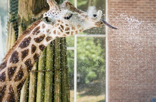 Zoo animals beat the heat