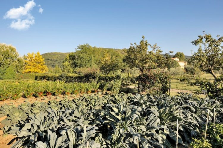 Organic Garden at Villa La Massa